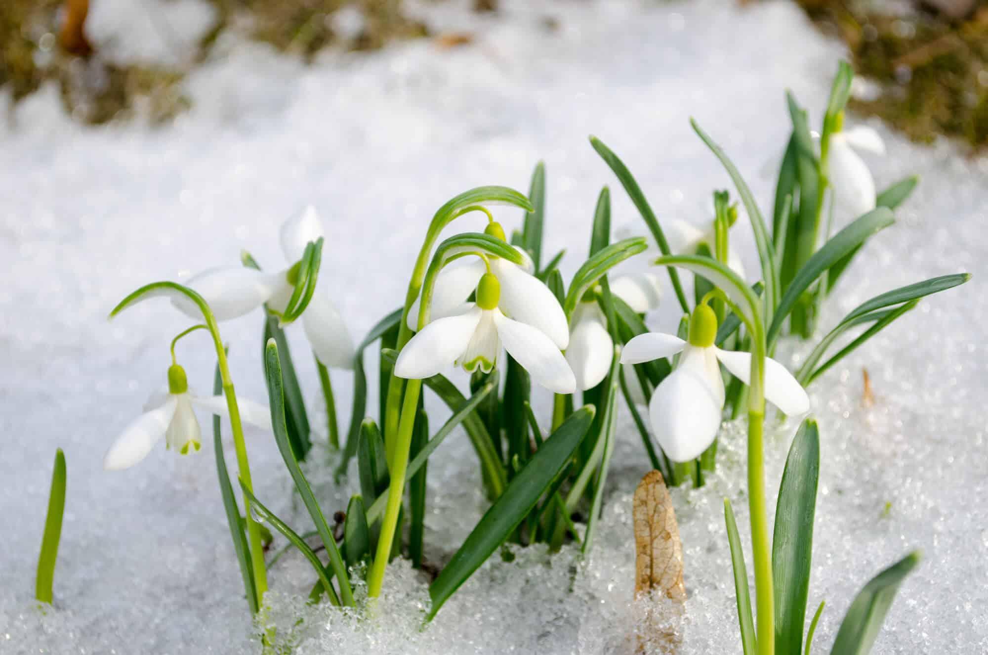 Jobs In The Garden: February Gardening Tips