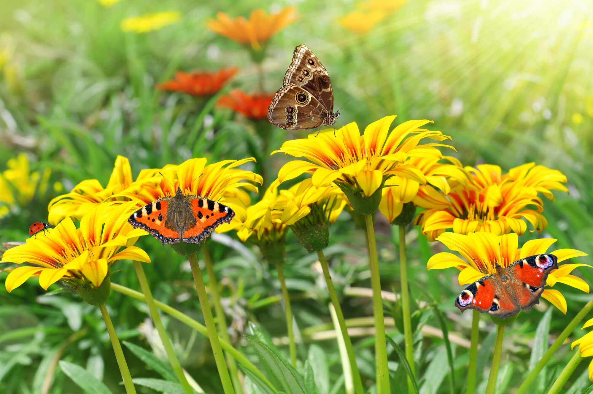 Jobs In The Garden: April Gardening Tips